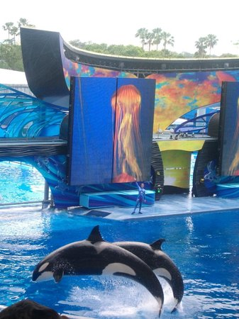 Grande Villas Resort: Seaworld!