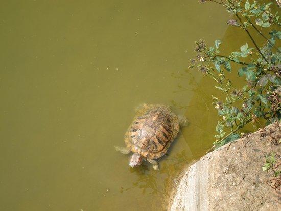 Yuantong Temple : Turtles