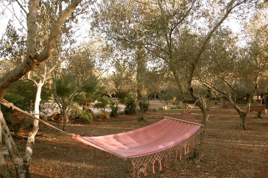 Agriturismo Masseria Nova Isola Verde: relax nell'ìoliveta