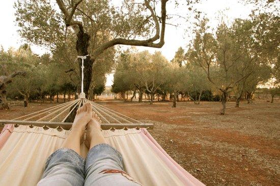 Agriturismo Masseria Nova Isola Verde: relax nell'oliveta
