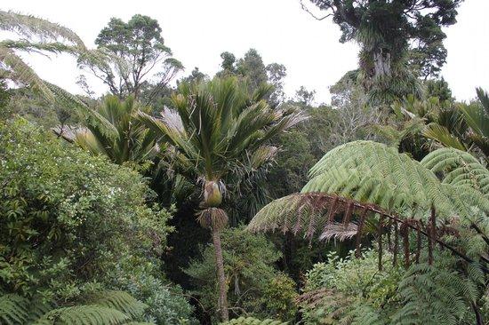 Te Nikau Retreat: view from our room
