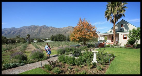 Montagu Vines Guesthouse : Beautiful Views of the Montagu mountains from our room.
