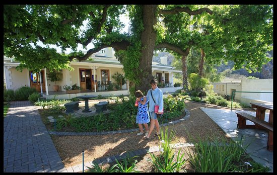 Montagu Vines Guesthouse: Wonderful plants with exceptional tree lines.