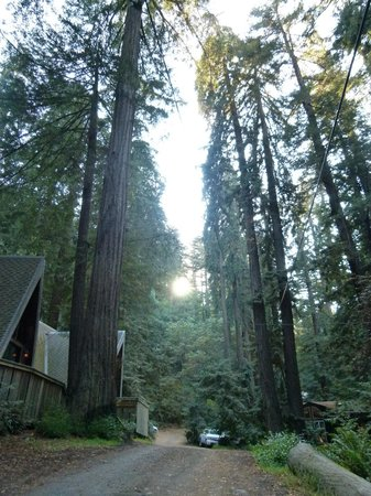 Big Sur Campground & Cabins : Gorgeous Trees in the Campground