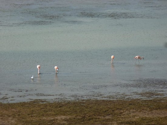 Xelena Hotel & Suites: View from the room: Flamingos!