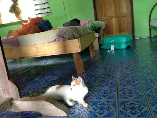 D'Cave Homestay : good morning, kitty.