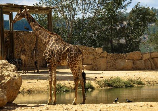 snake fotografía de Tisch Family Zoological Gardens (Biblical Zoo