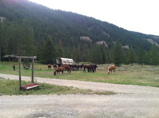 Covered Wagon Ranch: Horses grazing.