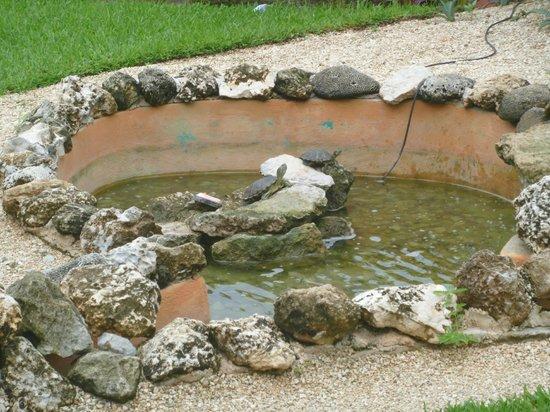 Nautibeach Condos: Turtle pond - condo #18