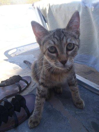 Akrotiri Hotel: Un des nombreux chats