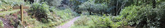 The Lancrigg: Woodland walks in the 30 acres of grounds