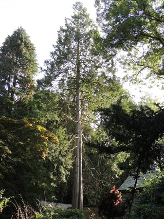 The Lancrigg: The grounds have a number of unusual trees
