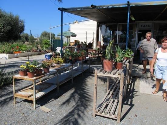 Duck Pond Market: Garden and Plants