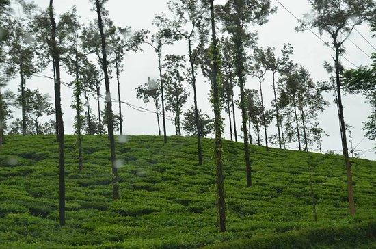 Crescent Residency : Tea garden