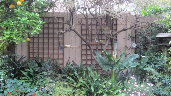 Claires of Sandton: Birds join you for breakfast