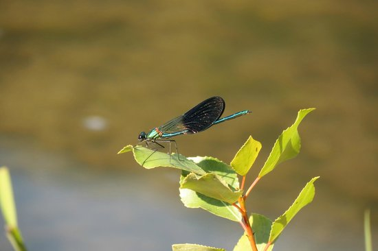 Domaine de la Sabliere : When relaxing by the river you're surrounded by butterflies and dragonflies.