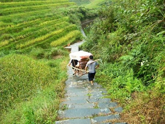 Long Sheng's Dragon Spine Rice Terraces: easy way down