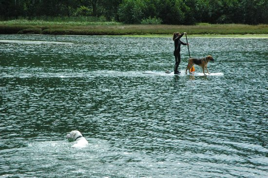 Big River: Paddle boarding w/pooch