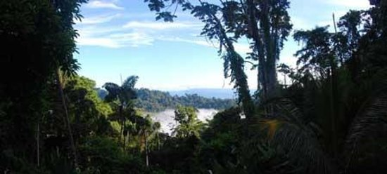 Samasati Retreat & Rainforest Sanctuary: view