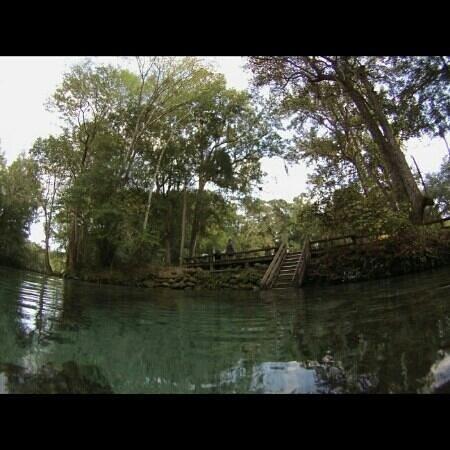 Ginnie Springs : ginnie