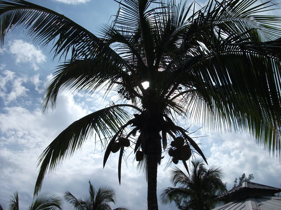 Palm at Rainbow Inn