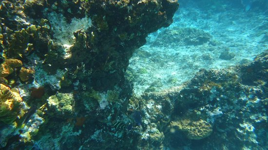 Cantamar Condos: snorkeling right in front of condo