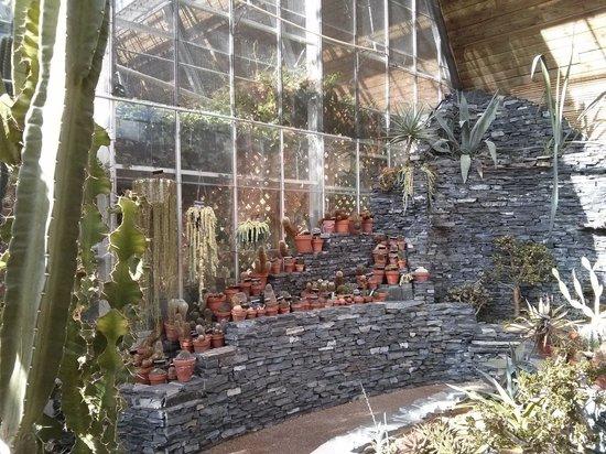Devonian Botanic Garden: In the Greenhouse