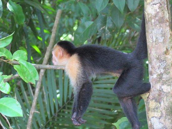 Farm of Life (Finca de Vida): Monkey at the National Park