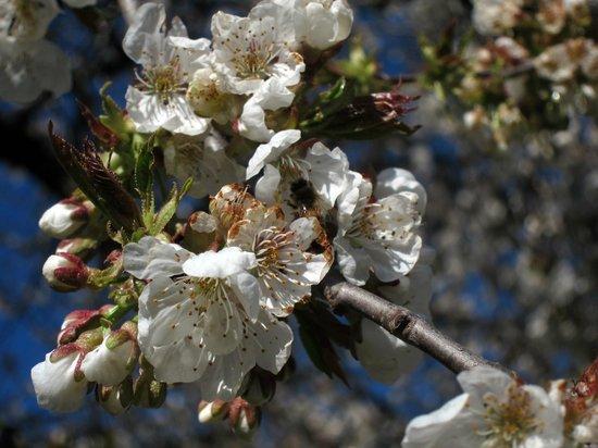Huala Hostel: Spring flowers.