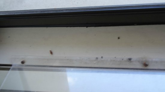 Dead Bugs On The 2nd Air Conditioner Picture Of The
