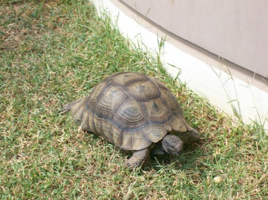 Hotel Stavroula Palace: The famous hotel turtle