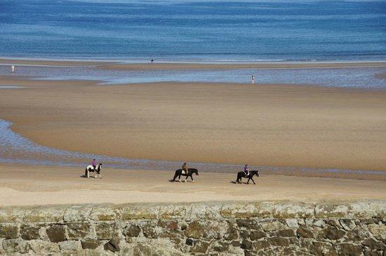 Bamburgh Castle: horses
