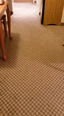 Holiday Inn Express Victor: carpet stains