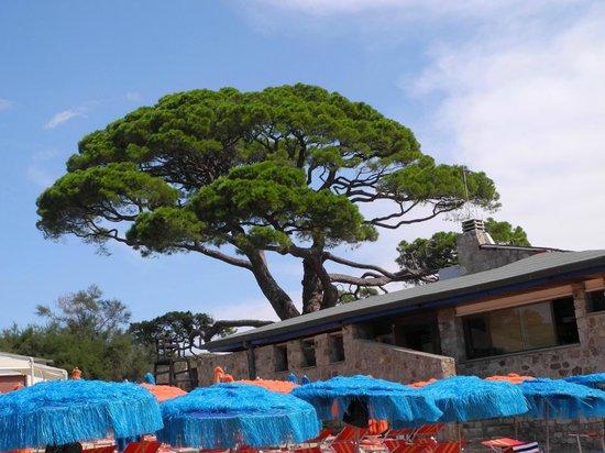Camping Appartamenti Tallinucci: Am Strand gibt es Restaurants und Bars
