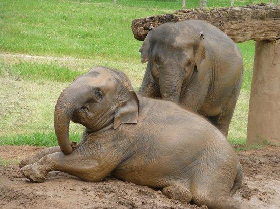 Funky Monkey Guesthouse & Tours: Elephant Nature Park