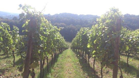 Staatspark Furstenlager: Vineyards