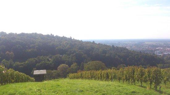 Staatspark Furstenlager: View