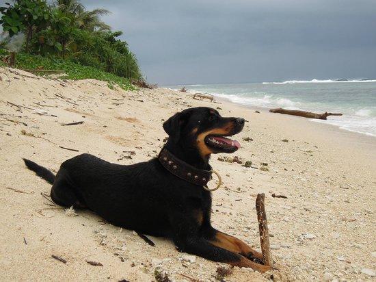 Surfcamp-Palmbeachkrui: paco on krui beach