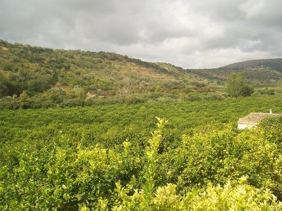 AgriResidence Valle Degli Dei: L'agrumeto.