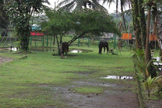 Hotel Seme Beach: Hotel's horses
