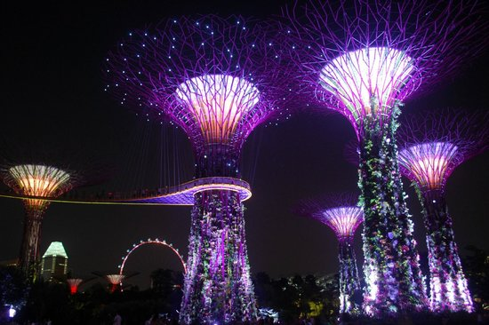 Gardens By The Bay: Night View