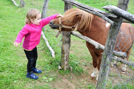 Pension Kezele: Pony in the garden