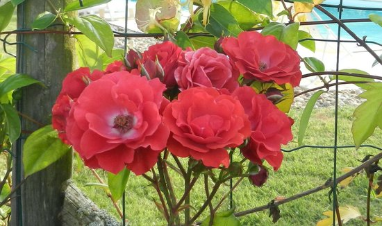 Les Chambres de la Houeyte: Jardin fleuri