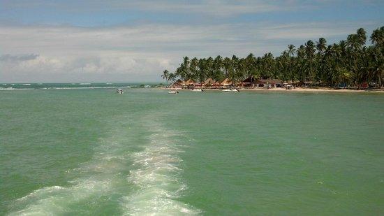 Carneiros Beach : Vista linda!