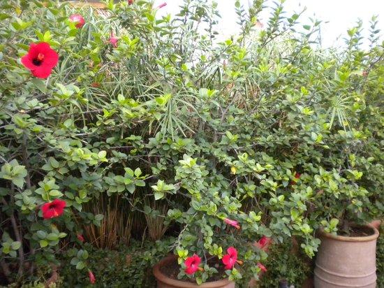 Riad Les Nuits de Marrakech : Roof Garden