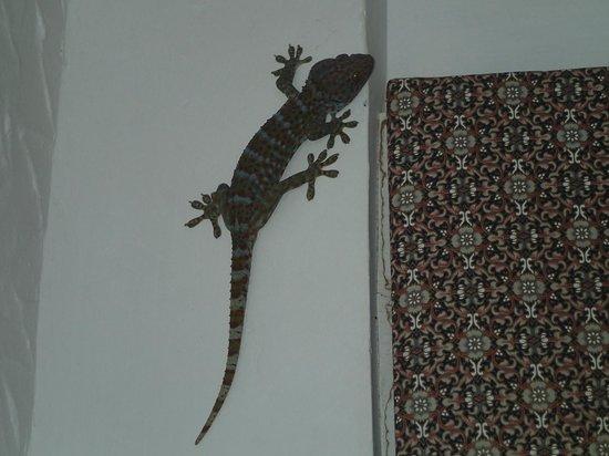 Anankhira Villas: Mr Friendly Lizard