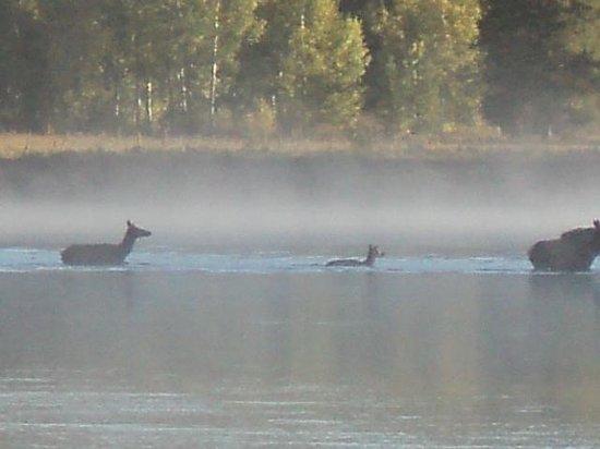 Elk Island National Park Swimm