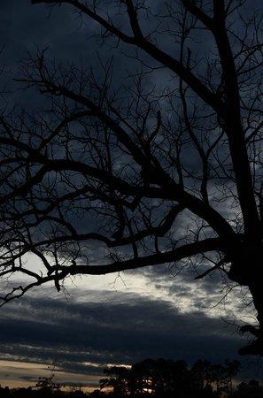 Windsor Castle Park: Gloomy Winter Sunset at the Park