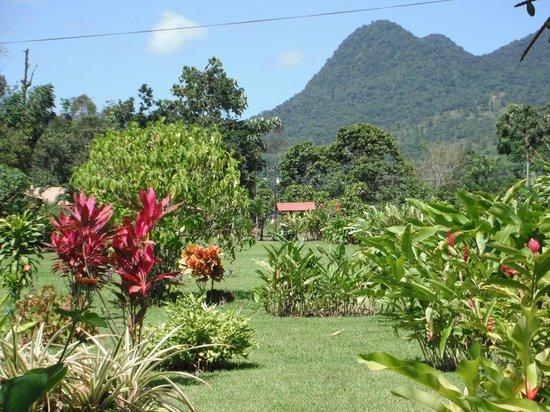 Cabinas La Catarata: Tropical Gardens