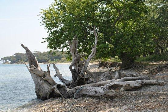Emel Pension : stilleven aan  het strand
